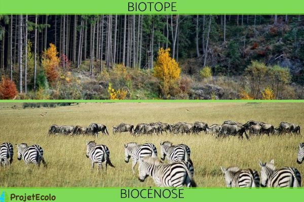 Biotope et biocénose : différence, relation et exemples - Différence entre biotope et biocénose