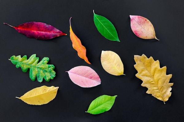 Différents types de feuilles - Schémas, classification et images