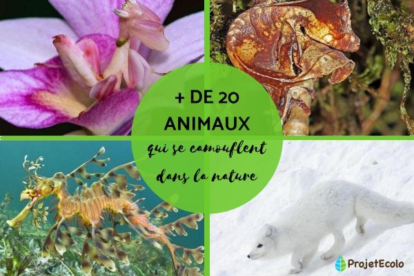 + 20 animaux qui se camouflent - Noms et photos