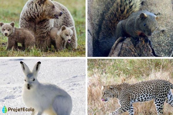 + 20 animaux qui se camouflent - Noms et photos - Autres exemples d'animaux qui se camouflent