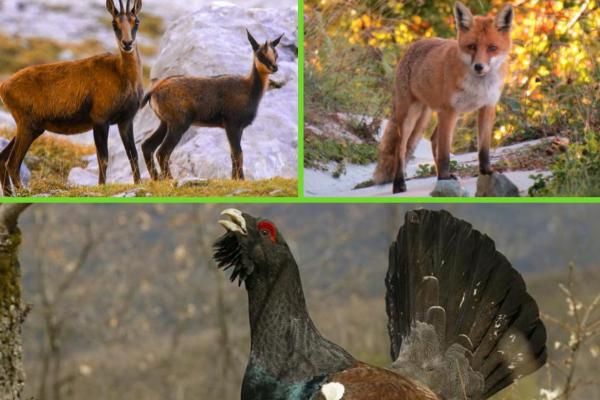 Flore et faune des Pyrénées - Faune des Pyrénées