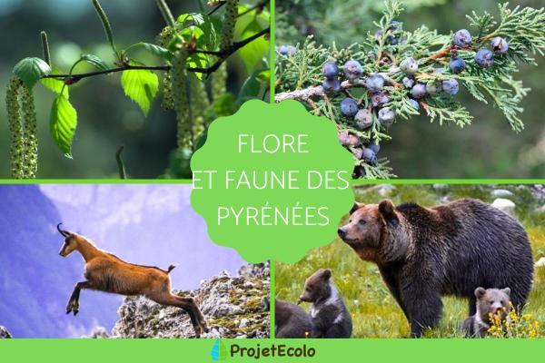 Flore et faune des Pyrénées