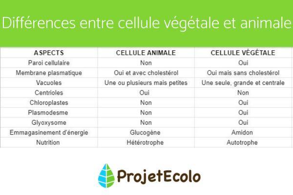 Cellule animale - Définition, Schéma, Taille - Différence entre cellule animale et végétale