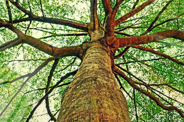 Parties d'un arbre - Schéma d'un arbre - Le tronc et les branches d'arbre