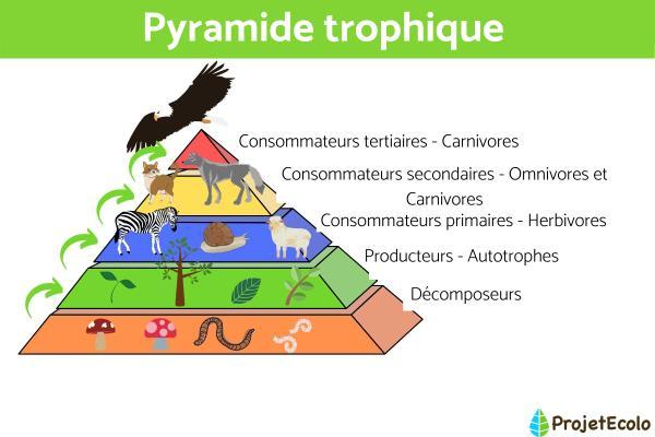 Qu'est-ce qu'un écosystème - Définition pour enfants - Comment classifier les organismes d'un écosystème