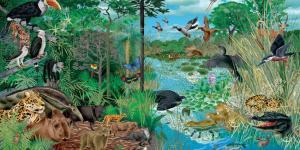 Qu'est-ce qu'un écosystème - Définition pour enfants