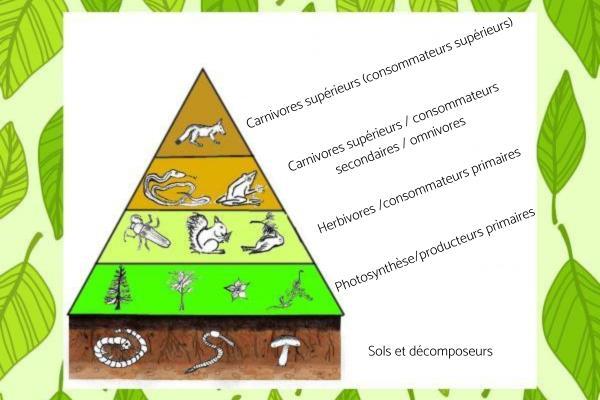 Consommateur primaire : Définition et exemples - D'autres organismes consommateurs