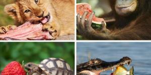 Organisme hétérotrophe : définition, caractéristiques et exemples