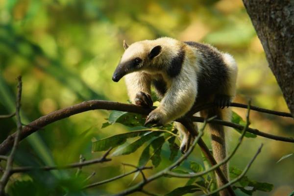 Les écosystèmes - Importance et préservation - L'importance des écosystèmes pour la biodiversité