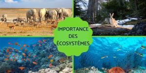 Les écosystèmes - Importance et préservation