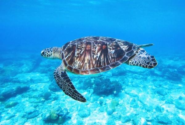 Océan Atlantique - superficie, profondeur et température - La faune de l'Océan Atlantique
