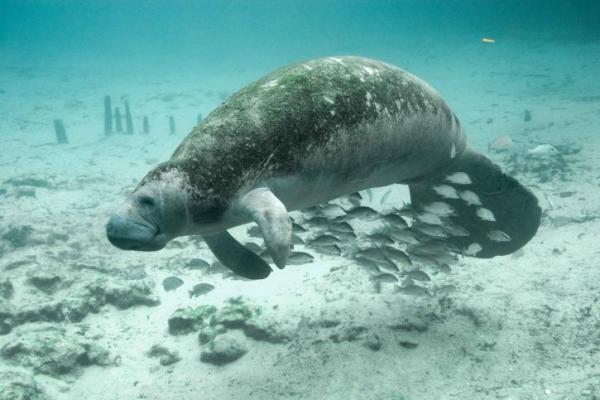 Liste de mammifères marins - Espèces représentatives -  Quels sont les mammifères marins ?