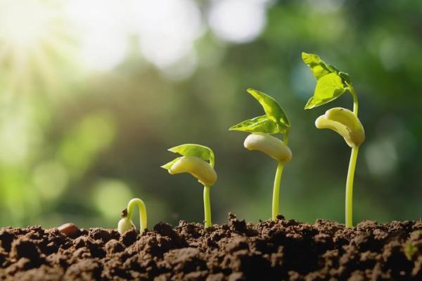 Croissance d'une plante - Commet pousse une plante - Germination des plantes - Naissance d'une plante
