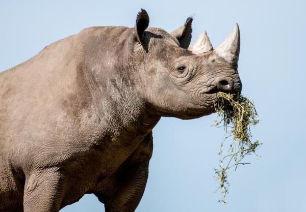 Animaux herbivores : liste et caractéristiques - Caractéristiques des animaux herbivores