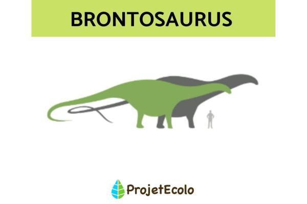Dinosaures herbivores : noms, types, caractéristiques et photos - Brontosaurus
