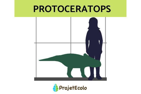 Dinosaures herbivores : noms, types, caractéristiques et photos - Protoceratops
