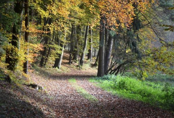 Écosystème forestier - Définition, caractéristiques, flore et faune - Définition de l'écosystème forestier