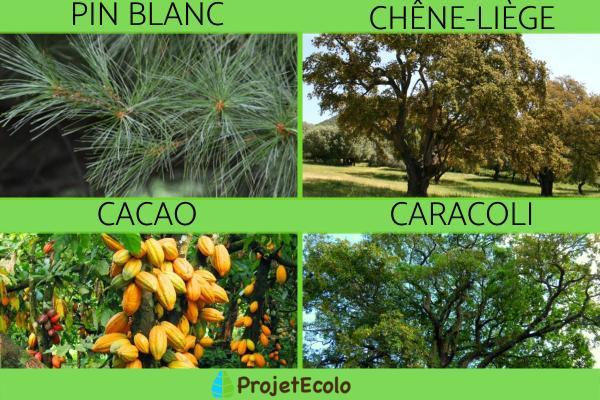 Écosystème forestier - Définition, caractéristiques, flore et faune - Flore de l'écosystème forestier
