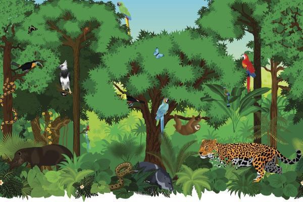 Fonctionnement d'un écosystème - Schémas, définitions et exemples - Fonctionnement d'un écosystème - Relations, flux, succession et équilibre