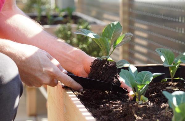 Que planter en septembre - Que semer, transplanter et récolter en septembre