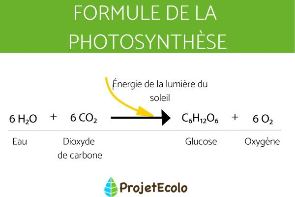 Qu'est-ce que la photosynthèse - Définition, principe et formule - Qu'est-ce que la photosynthèse - Définition de la photosynthèse