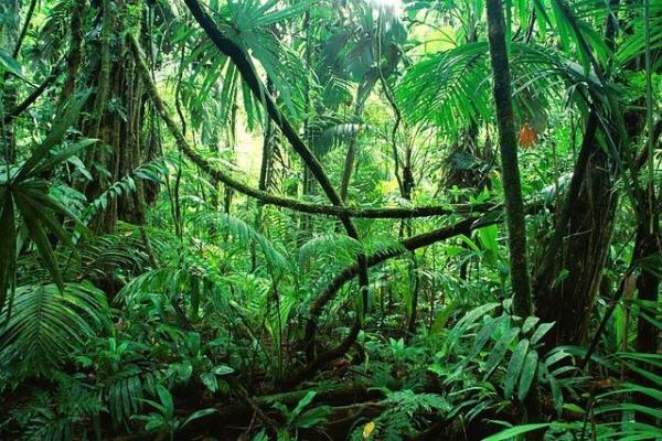 Les animaux de la forêt tropicale - Noms, caractéristiques et photos - Les conditions des forêts tropicales