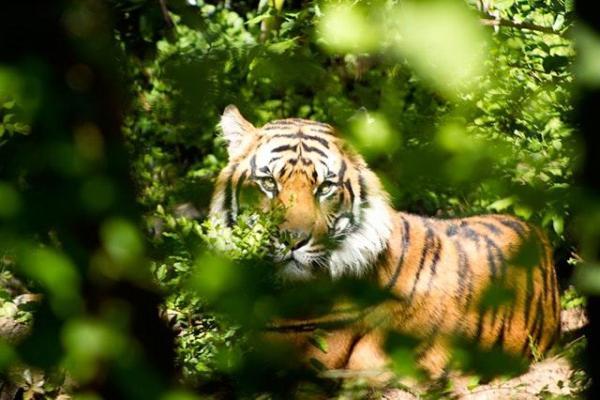 Les animaux de la forêt tropicale - Noms, caractéristiques et photos - Les principaux animaux qui vivent dans la forêt tropicale