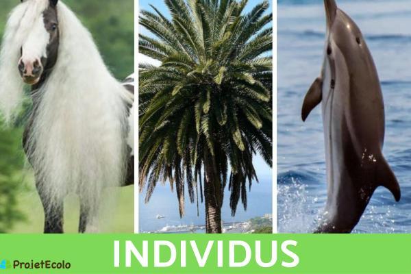 Niveaux d'organisation du vivant : Définition et exemples - 1 er niveau d'organisation du vivant : individu ou organismes