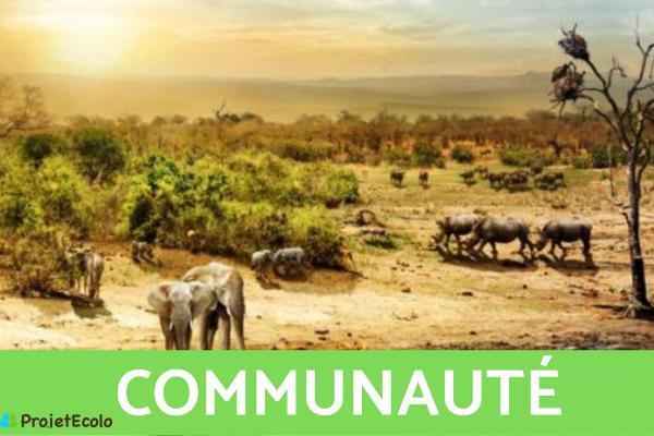 Niveaux d'organisation du vivant : Définition et exemples - 3ème niveau d'organisation du vivant : communauté