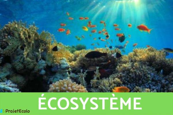 Niveaux d'organisation du vivant : Définition et exemples - 4ème niveau d'organisation du vivant : écosystème