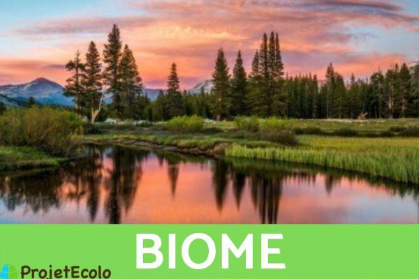 Niveaux d'organisation du vivant : Définition et exemples - 5ème niveau d'organisation du vivant - Biome