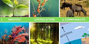 Niveaux d'organisation du vivant : Définition et exemples
