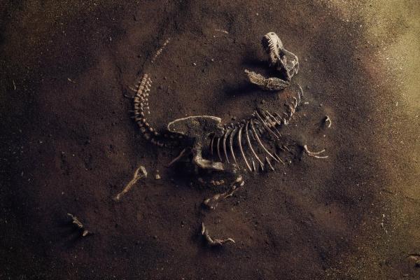 Dinosaures carnivores : noms, types, caractéristiques et photos - Caractéristiques des dinosaures carnivores et leur période d'existence