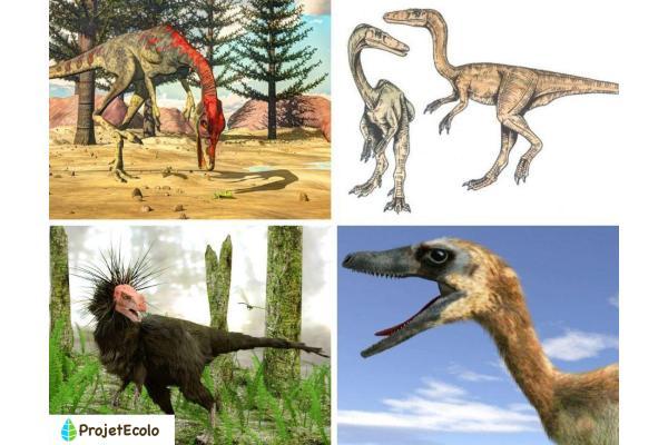 Dinosaures carnivores : noms, types, caractéristiques et photos - Exemples de petits dinosaures carnivores - Noms et photos